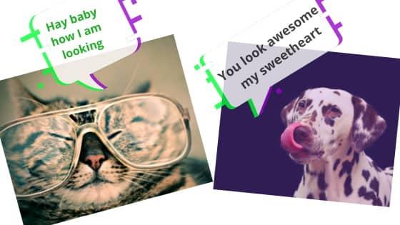 Nibba nibbi viral memes IMAGE